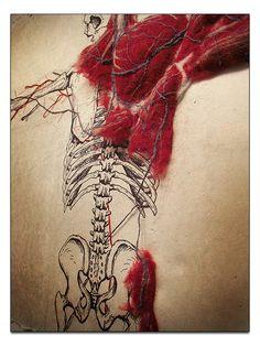 Systems – Dan Beckemeyer Illustration dessinées sur papier d'abaca. Broderie du système cardiovasculaire, muscles en feutre