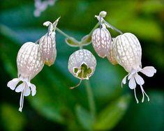 Unidentified wildflower in Palisades Interstate Park, by Shawn Phillips