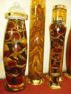 Bình ngâm rượu Hàn Quốc, dùng ngâm nấm linh chi thật tuyệt. 0984 957 602