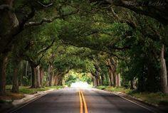 Favorite street in Pensacola!