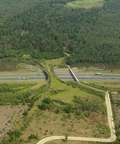 the borkeld netherlands animal bridge wildlife crossing overpass