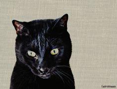 Bastet #cats #blackcats #photography by Clarissa Johal