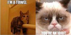 Look at me, I`m a towel!  don't be dumb!