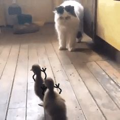 51 Ideas Funny Cats And Dogs Hilarious Kitty Funny Animal Videos, Cute Funny Animals, Funny Animal Pictures, Animal Memes, Cute Baby Animals, Funny Cute, Animals And Pets, Cute Cats, Hilarious