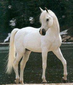 Horse n ° 22