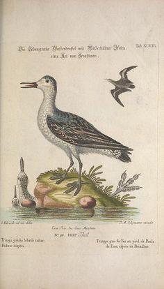 pt.8-9 (1776) - Recueil de divers oiseaux étrangers et peu communs…