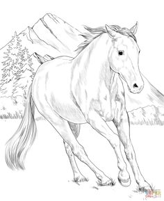 Free printable coloring pages American Paint Horse Coloring Page Horse Coloring Pages, Free Adult Coloring Pages, Free Printable Coloring Pages, Colouring Pages, Coloring Books, American Paint Horse, Baby Zoo Animals, Free Horses, Horse Drawings