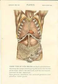 Afbeeldingsresultaat voor old anatomy intestine