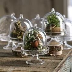 Love these miniature cloches!  They can be used for every holiday and so versatile because of the small size!