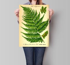 Fern print. Botanical illustration. Fern by ariadnathread on Etsy