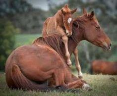 Gilbert Horse Properties For Sale