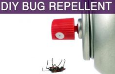 8 best bed bugs nj images on pinterest bed bugs pest control and ocean county pest control and diy repellents solutioingenieria Images