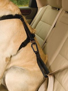 Kurgo Dog Seatbelt Tether with Carabiner Kurgo http://smile.amazon.com/dp/B0083QSSL6/ref=cm_sw_r_pi_dp_XyN3tb1T6KG58WPK