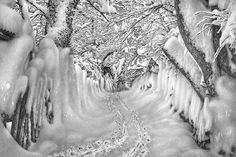 Pencil Art Landscapes | Full size of image is 800 × 534 pixels