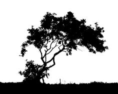 forest Silhouette | Wallpaper Trees Black And White
