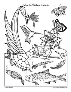 A Wetland Coloring Page For Very Young Naturalists With Little Smiling Animal Twist
