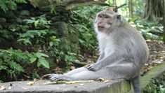 Bali Monkey Forest, Mengwi Temple, and Tanah Lot Afternoon Tour Nocturne, Ubud, Voyage Bali, Monkey Forest, Art Japonais, Wildlife Park, Baby Turtles, Bali Travel, Sandy Beaches