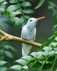 colibri para mi mama