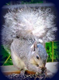 Hungry Squirrel by Joy Patzner