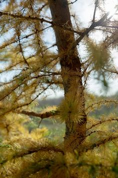 Pine by Ivan Popov on 500px