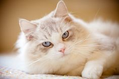 Cats are beautiful...