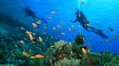 #Andaman Islands boast of scuba diving and other such water sports