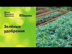 Подготовка огорода к зиме, сидераты, теплые грядки - YouTube