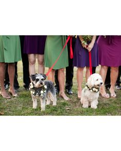 doggie floral collars :)