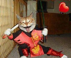 Crazy Ninja Cat!!!