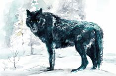 watercolor wolf - Ricerca Google Watercolor Wolf, Watercolor Paper, Watercolor Flowers, Wolf Sitting, Winsor And Newton Watercolor, Book Illustration, Pet Birds, Woodland, Design Art