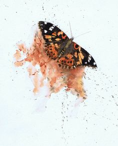 Painted Lady butterfly - abstract watercolour by Julie Horner