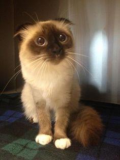 #cute #animals #cat #kitty