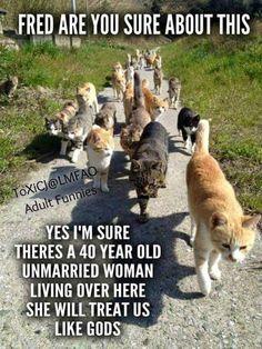 (3) Timeline Photos - Animal Welfare League