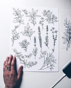 Flower art drawing sketches doodles 40 ideas for 2019 Flower Art Drawing, Botanical Line Drawing, Plant Drawing, Botanical Drawings, Drawing Art, Art Drawings Sketches, Tattoo Drawings, Doodle Drawings, Flower Doodles