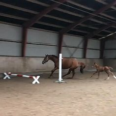 Funny Horse Videos, Funny Horse Pictures, Funny Horses, Funny Animal Videos, Most Beautiful Horses, Pretty Horses, Horse Love, Animals Beautiful, Cute Little Animals