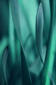 freeios7.com-iphone-4-iphone-5-ios7-wallpapermj95-leaf-grass-blue-bokeh-nature-iphone4