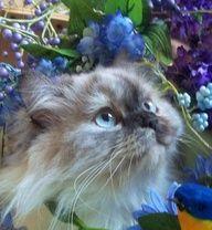 bella - http://crazyforkitties.net/bella/