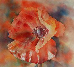 Thomas Habermann Watercolour #poppy