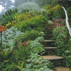 magical garden stairs in a hillside landscape Garden On A Hill, Sloped Garden, Xeriscape, Plants, Landscape Design, Gorgeous Gardens, Outdoor Gardens, Dream Garden, Hillside Landscaping