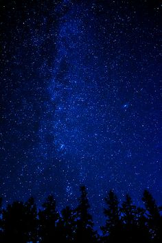 Milky Way and Trees An image of the Milky Way and some trees at night. tree trees Milky Way space outer-space night star stars Blue Aesthetic Dark, Rainbow Aesthetic, Night Aesthetic, Aesthetic Colors, Aesthetic Pictures, Dark Blue Wallpaper, Night Sky Wallpaper, Star Wallpaper, Blue Wallpapers