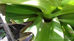 Guyana 2016 - TheBeastAndBeauty Island, Plants, Islands, Plant, Planets