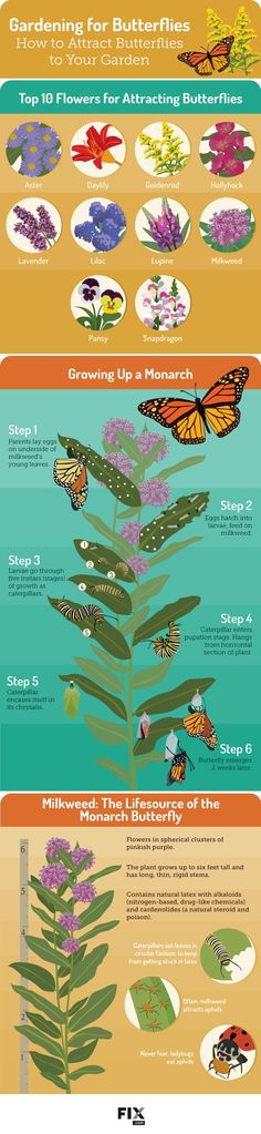 Incorporate plants that attract butterflies into your garden to help reverse the decline in pollinators.
