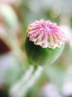 Macro #flower #plant #seed