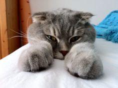 Oh hi. I see you're awake.
