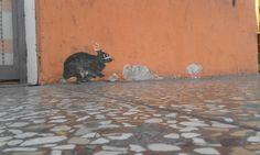 """""""Come che sia, le ricerche di Giobi hanno svoltato quando s'è imbattuto in due conigli neri, riprodotti con la stessa matrice di stampa e affissi a non più di duecento metri l'uno dall'altro. Il primo gli era sbucato tra i piedi all'angolo di una parete dietro casa sua..."""" (1a: http://www.carmillaonline.com/2015/11/08/larca-della-fattanza-capitolo-1a/)"""