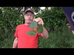 How to never have a serious poison ivy rash again! | Extreme Deer Habitat