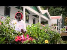 Saba Tourist Bureau welcomes you to the island of Saba. Your island adventure awaits...
