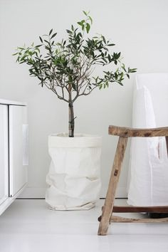 love this cute idea - paper bag - olive tree - decoration - home - interior Interior Plants, Interior And Exterior, Nordic Interior, Indoor Olive Tree, Olivier En Pot, Norwegian House, Interior Minimalista, Home And Deco, My New Room