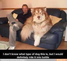 Humour animal, humor dogs, funny pics, hilariousness …For more funny pictures and hilarious humor visit www.bestfunnyjokes4u.com/rofl-funny-pic-of-the-day-8/