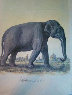 elephant~